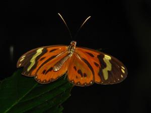 蝶々blog03