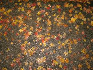 2008.11.24紅葉blog02