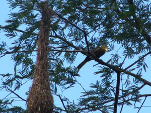 鳥の巣blog01
