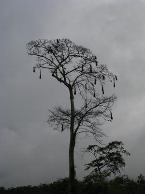 鳥の巣blog02