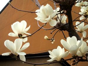 2009.3.19木蓮blog01