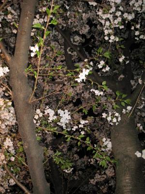 2009.4.7順ちゃんちblog02