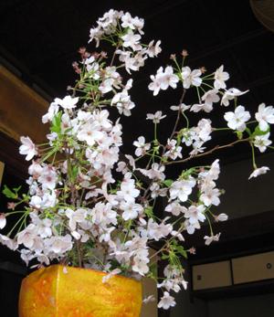 2009.4.9桜blog01