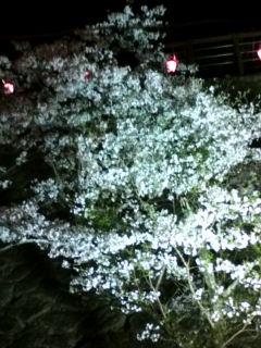 鶴山公園 桜
