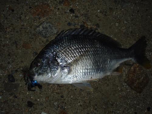 2009.5.9淀川キビレ2