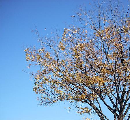 20081122枯葉と空と①