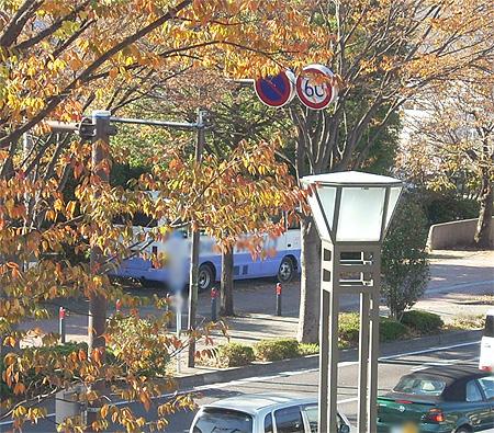 20081122枯葉と街灯と