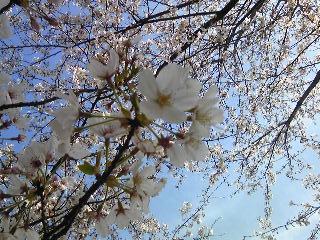 「桜」も~も~らんど(福岡市)
