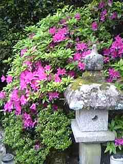 「庭園」べっぷ昭和園(別府市)