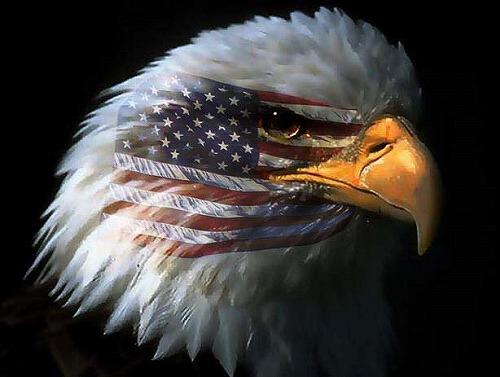 eagle_flags-.jpg