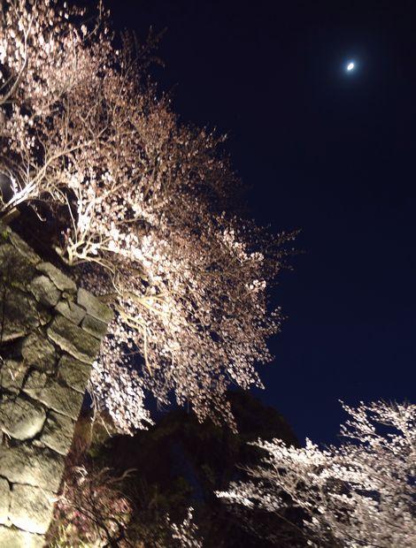 月と桜・5(20120331)
