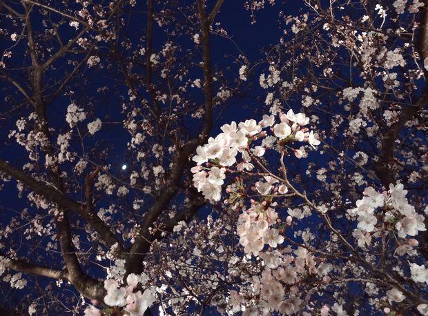 月と桜・4(20120331)