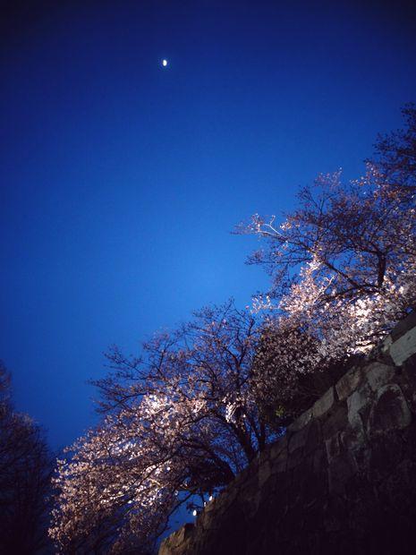 月と桜・3(20120331)
