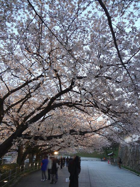 福岡城さくらまつり・7(20120331)