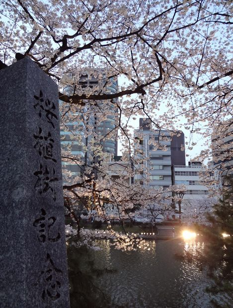 福岡城さくらまつり・6(20120331)