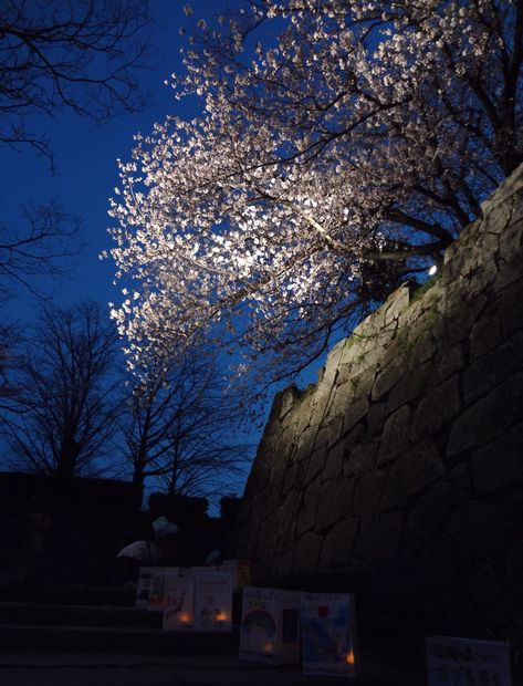 福岡城さくらまつり・12(20120331)