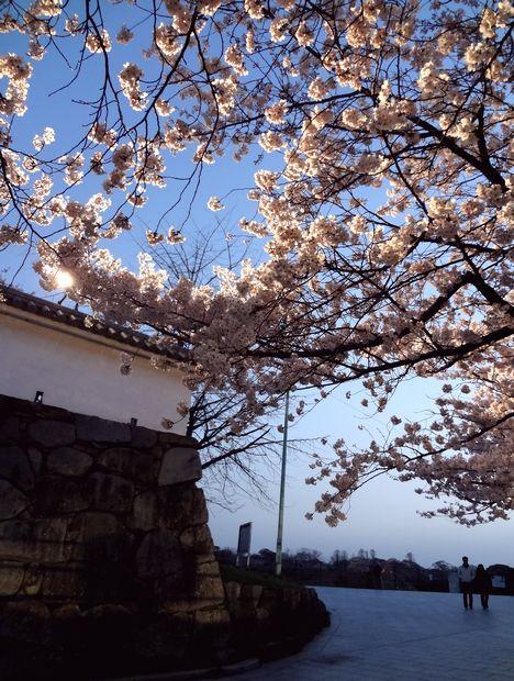 福岡城さくらまつり・11(20120331)