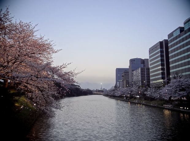 福岡城さくらまつり・10(20120331)