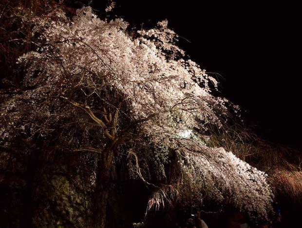 福岡城さくらまつり・15(20120331)