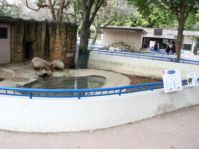 081029kapibara194.jpg