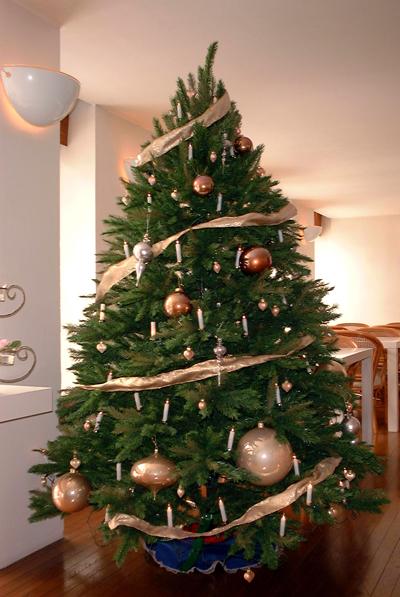 ミストラルのクリスマスツリー1