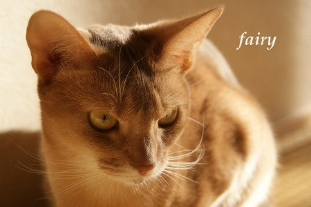 fairy121501.jpg