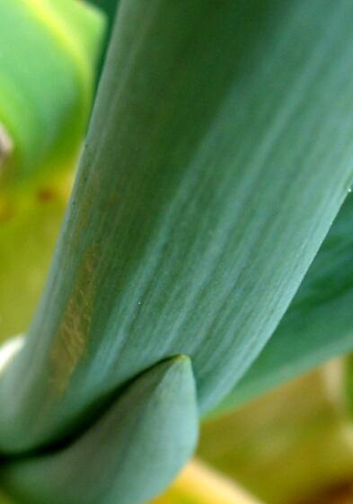 ネギ2010-05