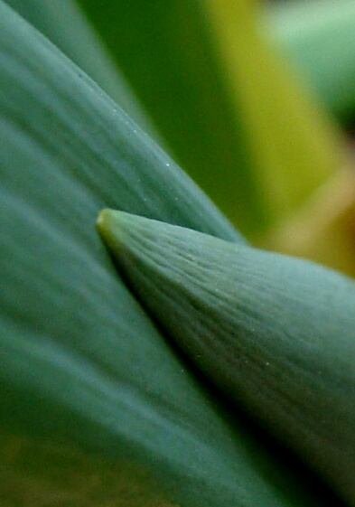 ネギ2010-04