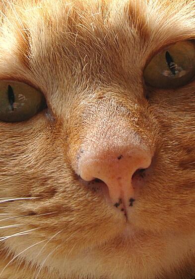 Cats2010-06微笑むネコ