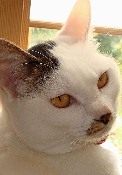 Cats2010-05呼んだぁ