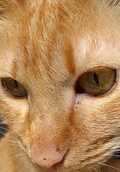 Cats2010-04猫だって考える