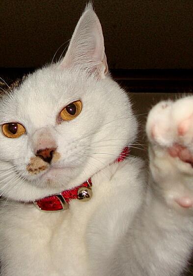 Cats2010-03異議ありーっ