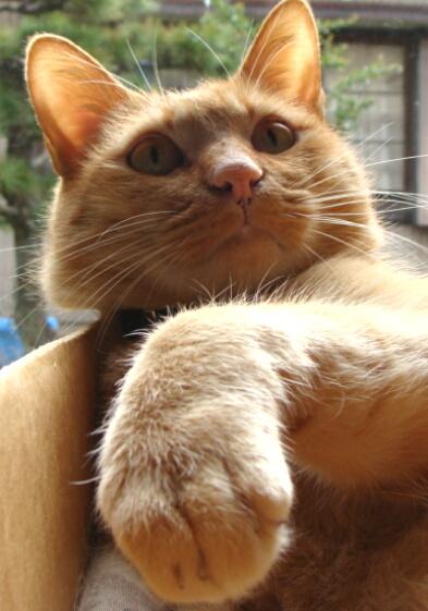 Cats2010-02手の甲にKissなら