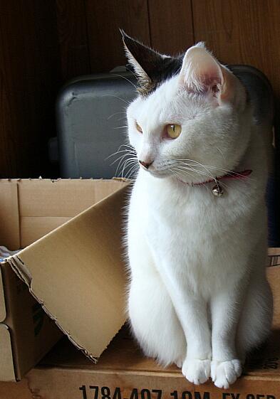 Cats2010-01おすまししてます