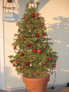 クリスマスツリー 002