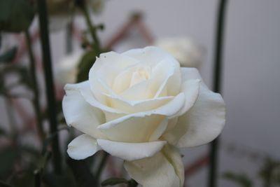 20092585.jpg
