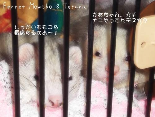 2012_momoteru04.jpg