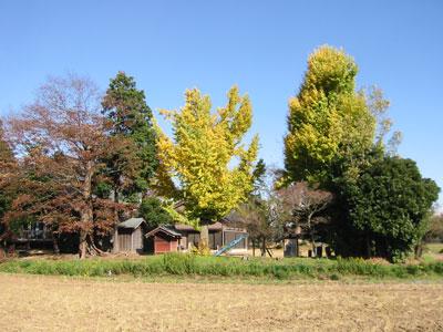 2008-11-20.jpg