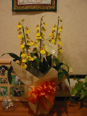 2008-12-8h.jpg