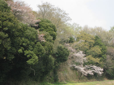 2009-04-09.jpg