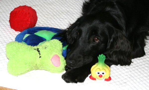 おもちゃとココ