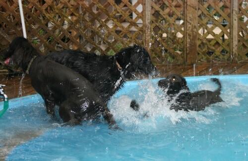 プールとアデルちゃん