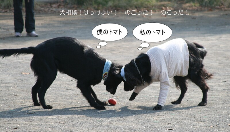 ココ&ジョイ