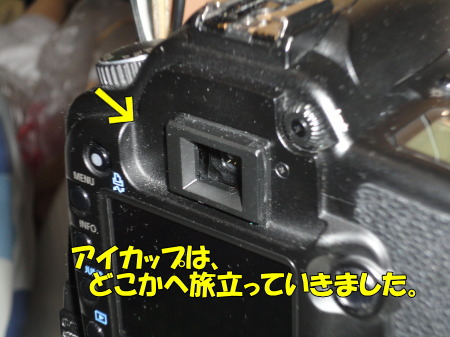 1005012.jpg