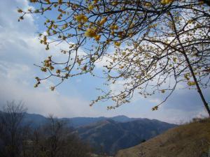 20080301宝山登神社7