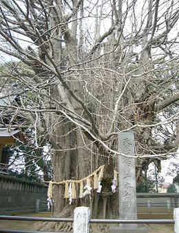 葛飾八幡宮 帝釈天5