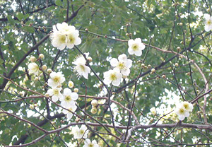 20080304葛飾八幡宮 帝釈天6
