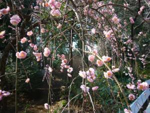 所沢神明社、田無神社、井草八幡他10