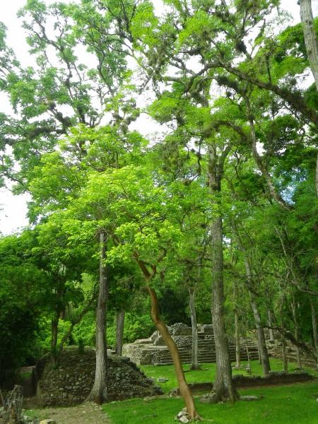 20110531_11_Copan_Ruinas.jpg