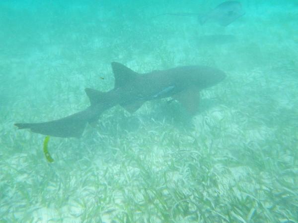 20110618_07_Caye_Caulker_Snorkeling.jpg